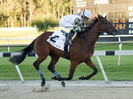 Sole Volante Kentucky Derby Contender Profile