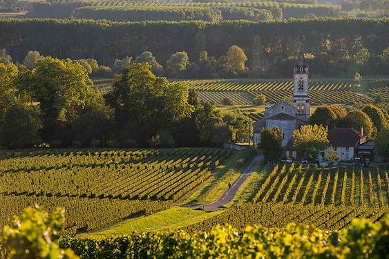 Bordeaux_FRANCE_SauternesLoupiac_Vineyar