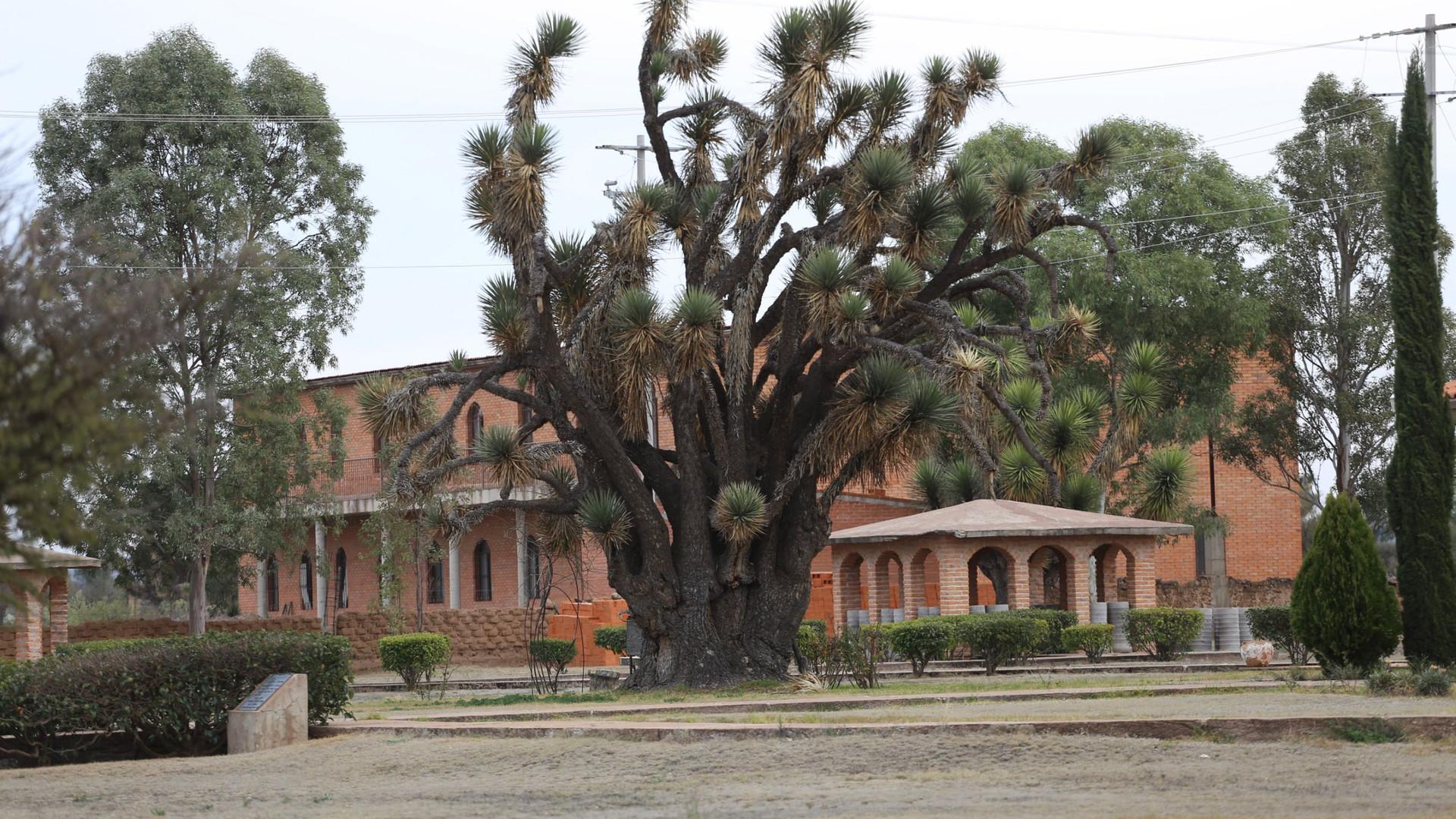 Clinic ~ Bethshean Mexico Mission
