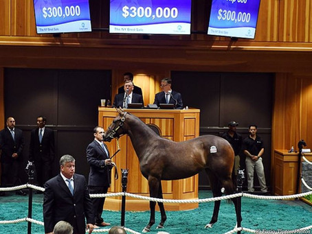 Runhappy Filly Brings $300,000 at New York-Bred Sale
