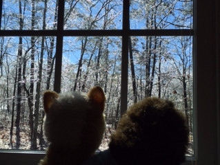 Looking at the icy trees