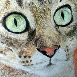 Retrato de gato doméstico