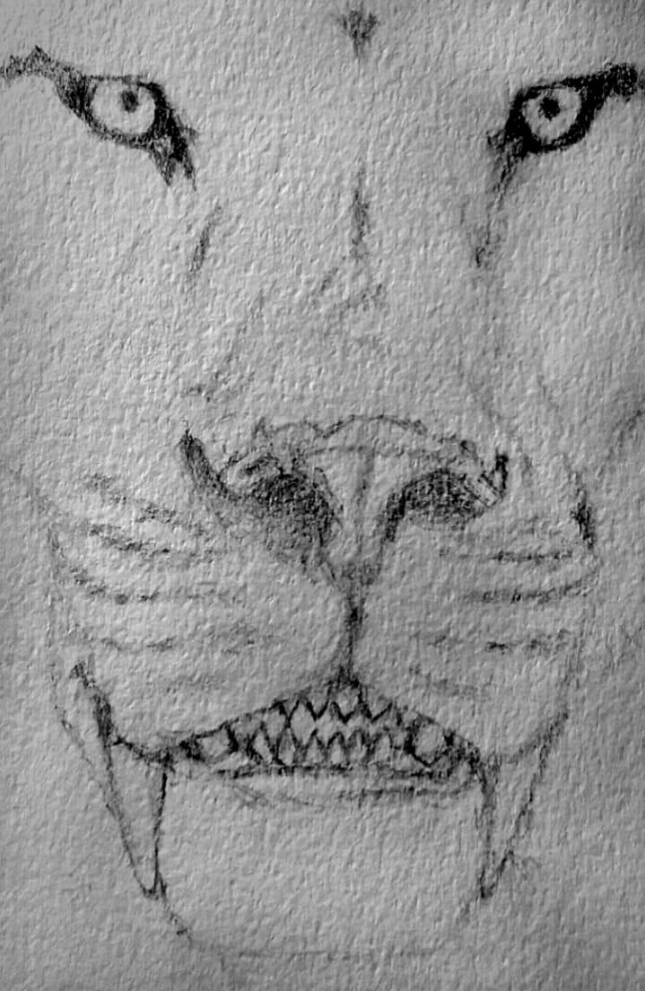 Homotherium Serum. Primer bosquejo.