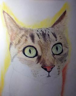 Retrato de gato común a base de policrom