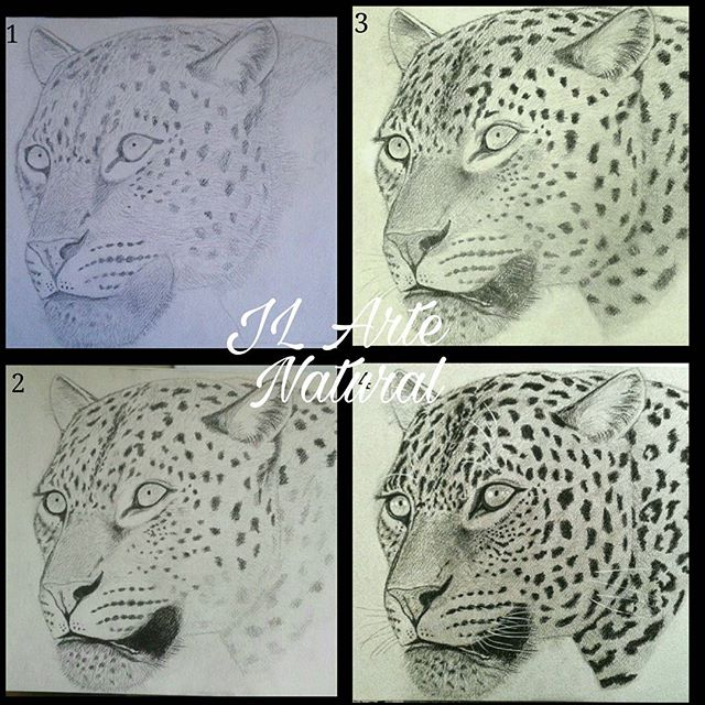 Leopard, step by step.