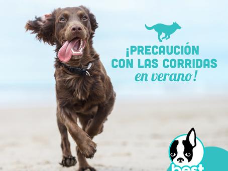 Consejos para el cuidado de nuestra mascota este verano