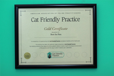 certificate-cat-friendly-practice.jpg