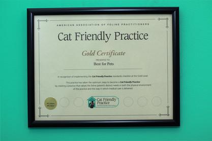 certificate-cat-friendly-practice.jpg