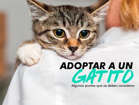 El compromiso de adoptar un gato