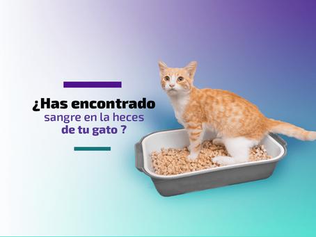 ¿Has encontrado sangre en las heces de tu gato?