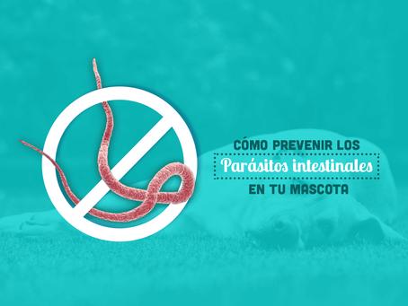 Cómo prevenir los parásitos intestinales de tu mascota