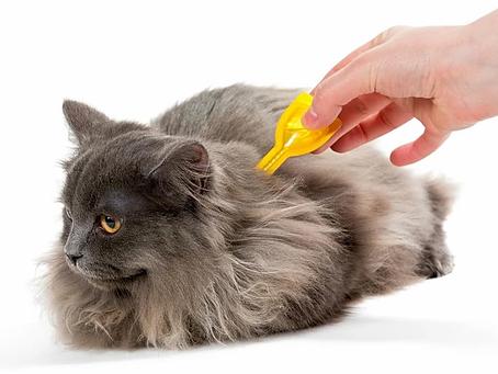 Gato saludables: Control de parásitos externos e internos