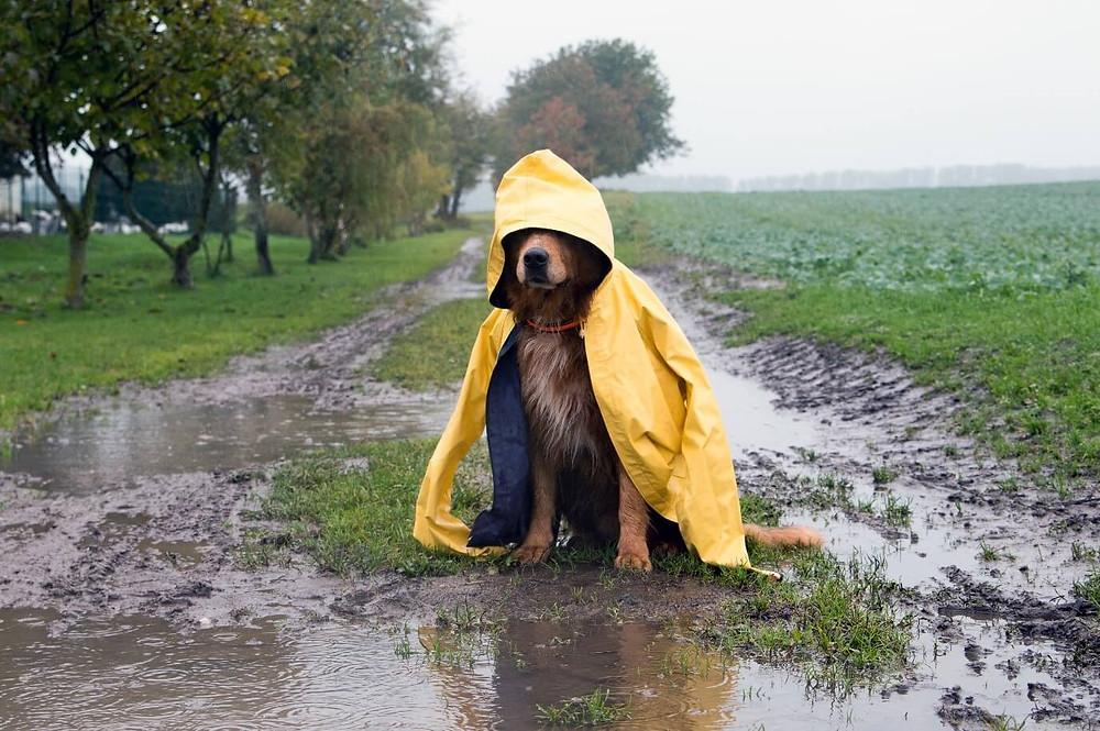 Recomendaciones para cuidar tu mascota en época de lluvia