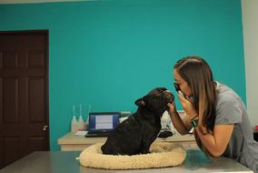 Consultorio de perros