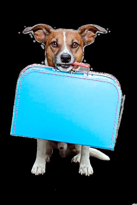 hospedaje de perro