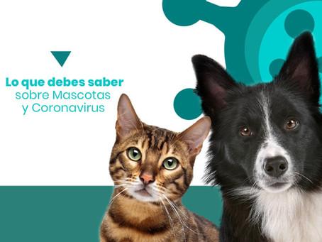 Lo que debes saber sobre Mascotas y Coronavirus