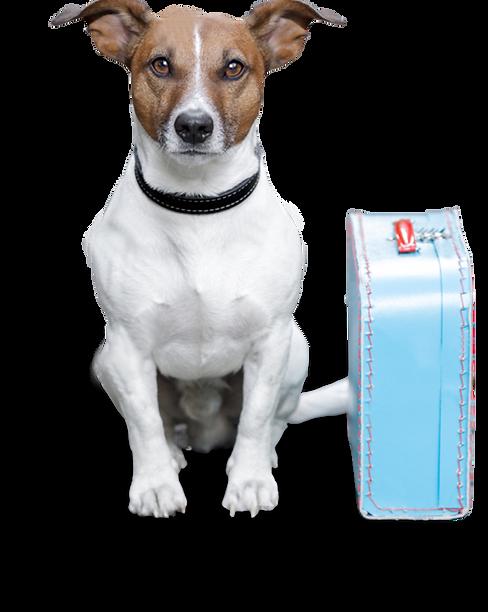 perro con maleta