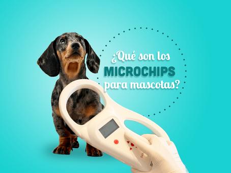 Microchips para tu Mascota