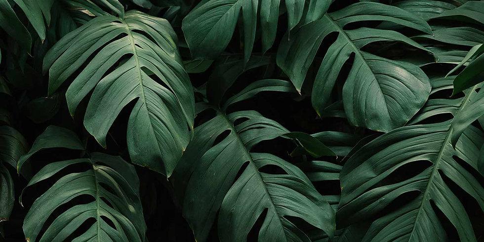 fondo-hojas.jpg