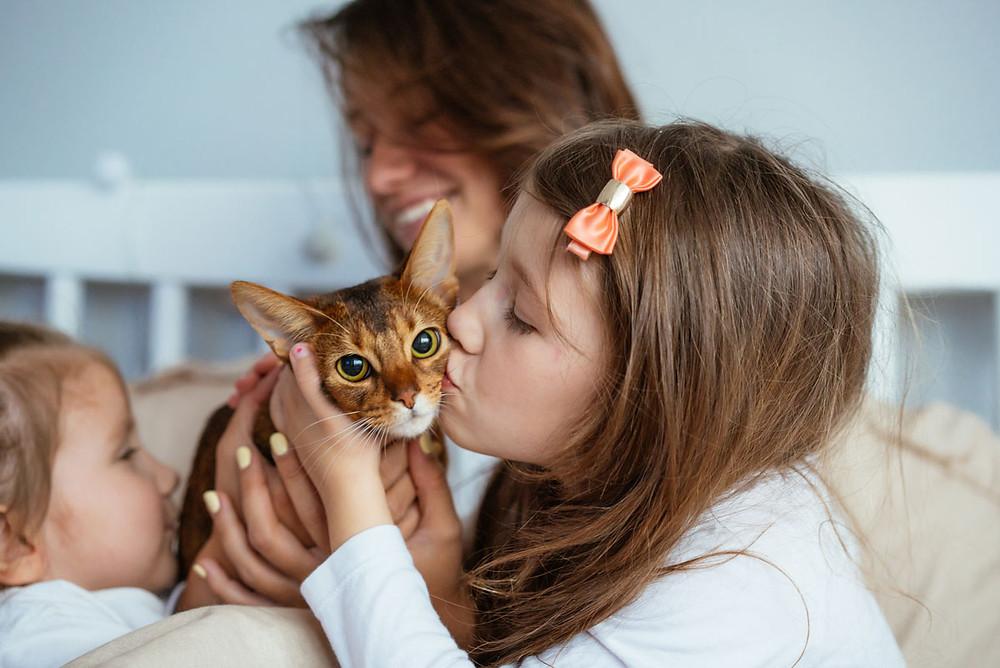 Gatos con familia