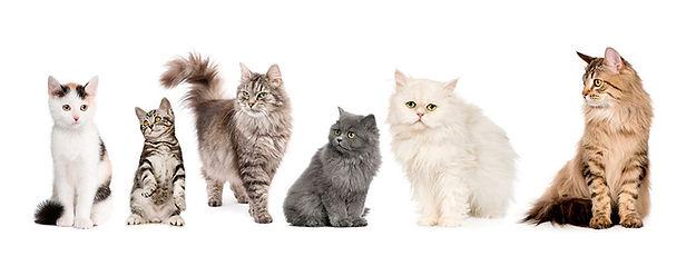 gatos-li.jpg
