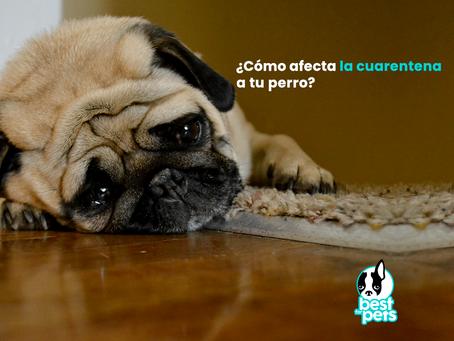 ¿Afecta la cuarentena a tu perro?
