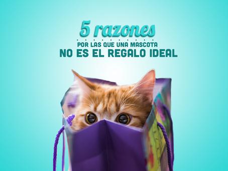 Cinco razones para no regalar mascotas.