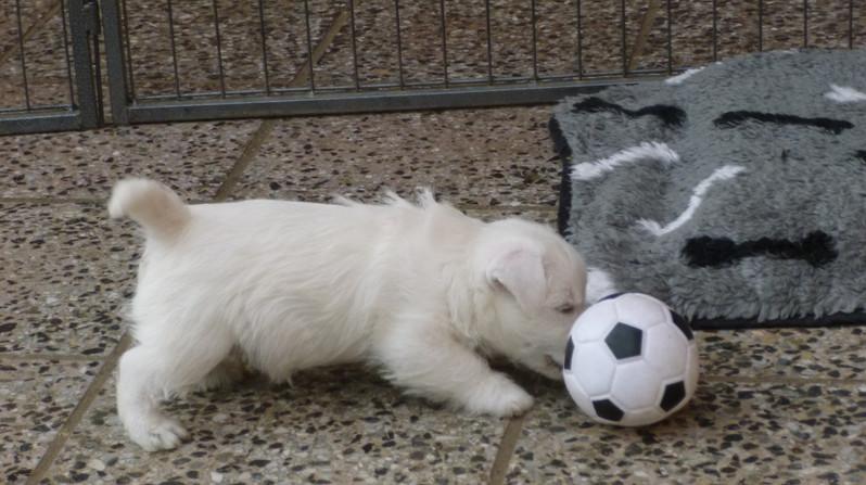 wollen wir Ball spielen ?