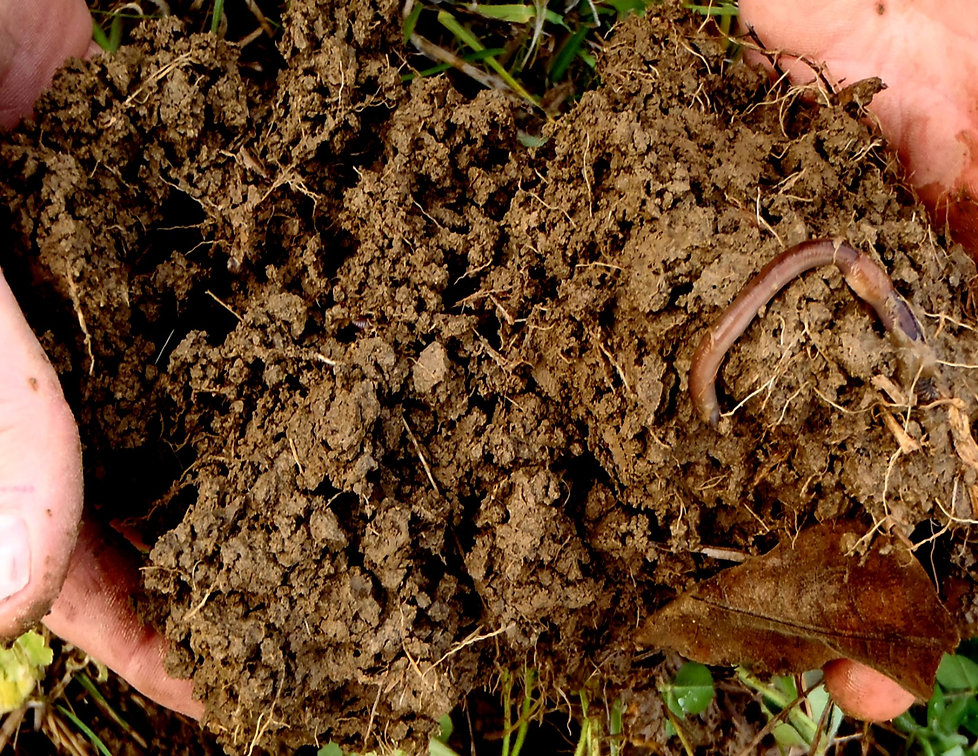 soil hands worm.jpg