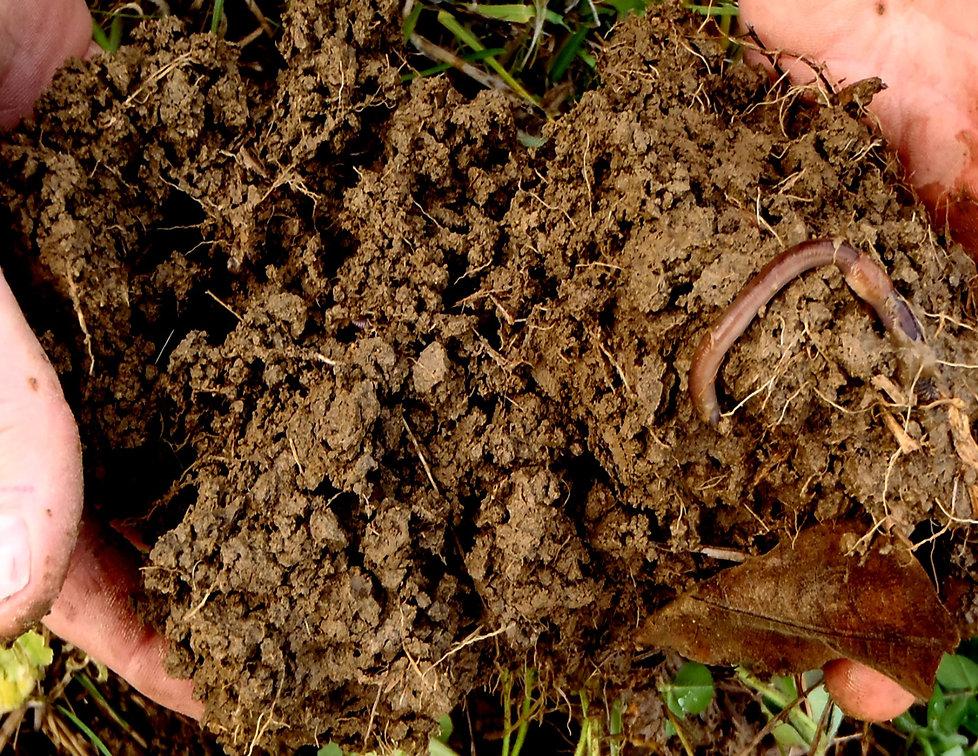 soil hands worm.jpg