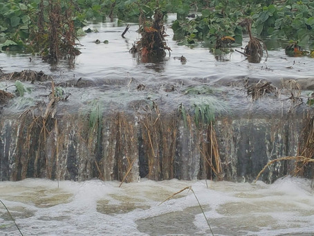 Soil Health and Water Quality (August 2018)