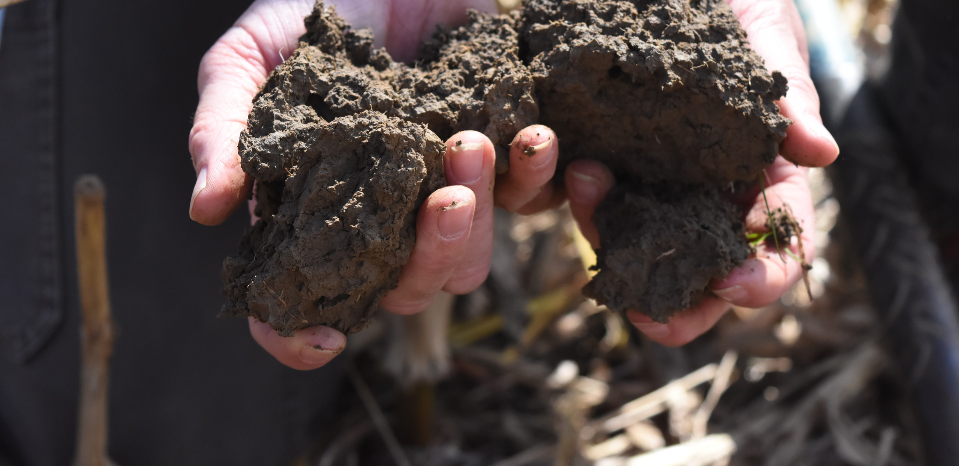Healthy Soils White River Bottoms