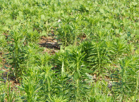 Weed Control on Prevent Plant Acres (July 2019)