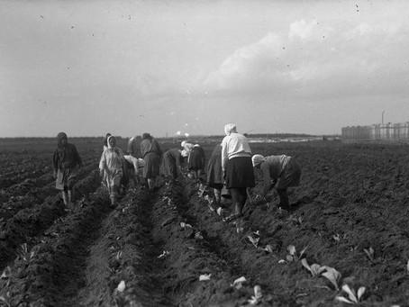 В годы войны сезонная работа жителей города в колхозах и совхозах области была обязательной...