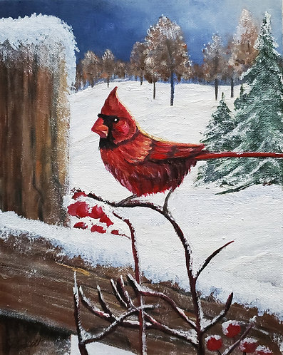 Winter Cardinal 3