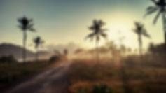 palm-trees-1081670__340.jpg