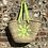 Thumbnail: Sun Basket
