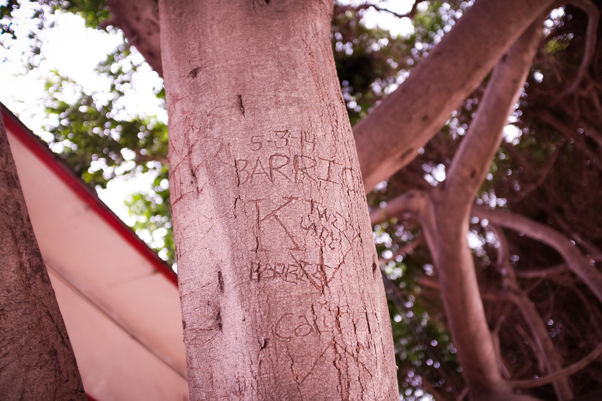 Three of his children engraved the tree outside his house on his 70th birthday.