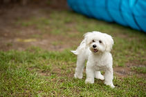 Yappy Days  (13 of 43).jpg