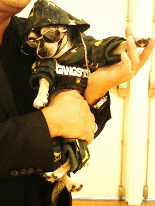 "BANDIT RUBIO WEARS IS PET FAHIONS  2010 NEW YORK PET FASHION WEEK  BANDITRUBIO MODELS A CAMOUFLAGE """