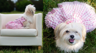 Quibus Paws Exclusive brand IS PET clothes reviews