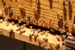 hive_closeup