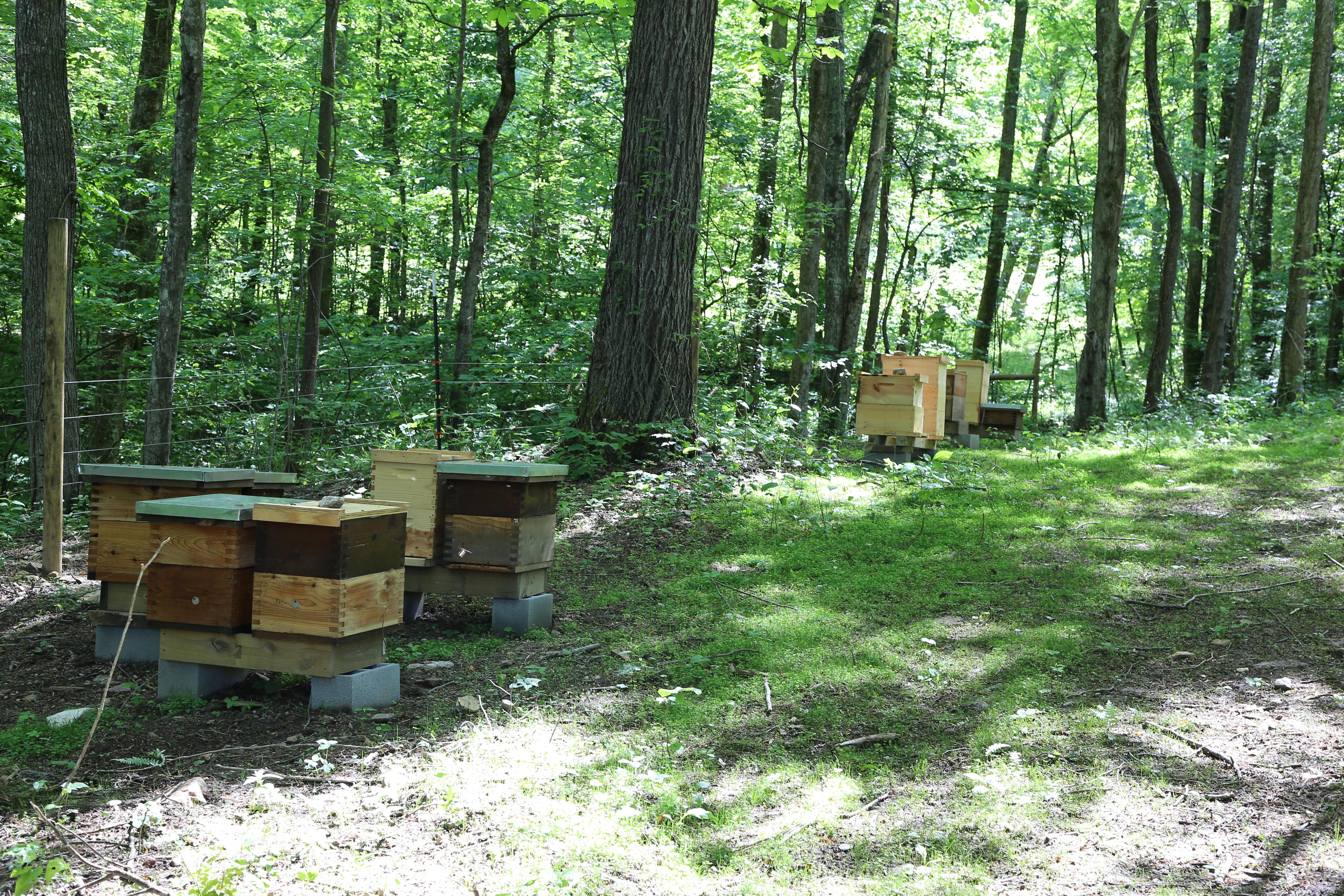 apiary_2