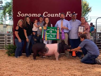 2019 SONOMA COUNTY FAIR, CA