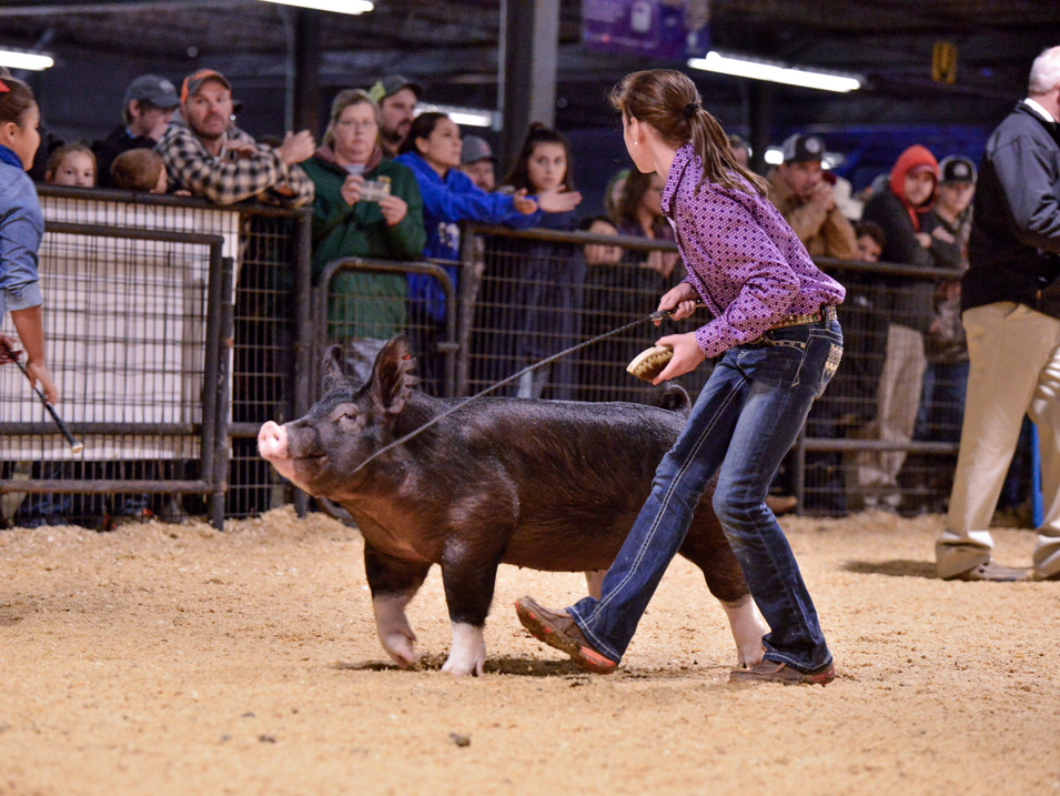 2018 ARKANSAS STATE FAIR