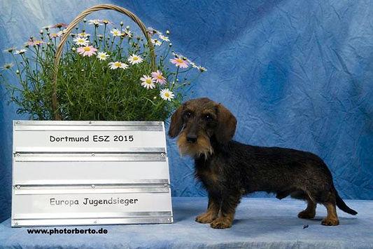 Olej von Sunderhaar FCI, EJS.JPG