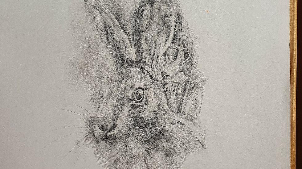 Hare II- Elizabeth Miller-Vermeulen