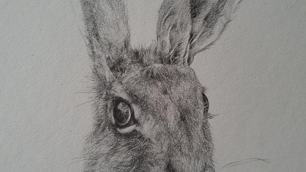 Hare III- Elizabeth Miller Vermeulen