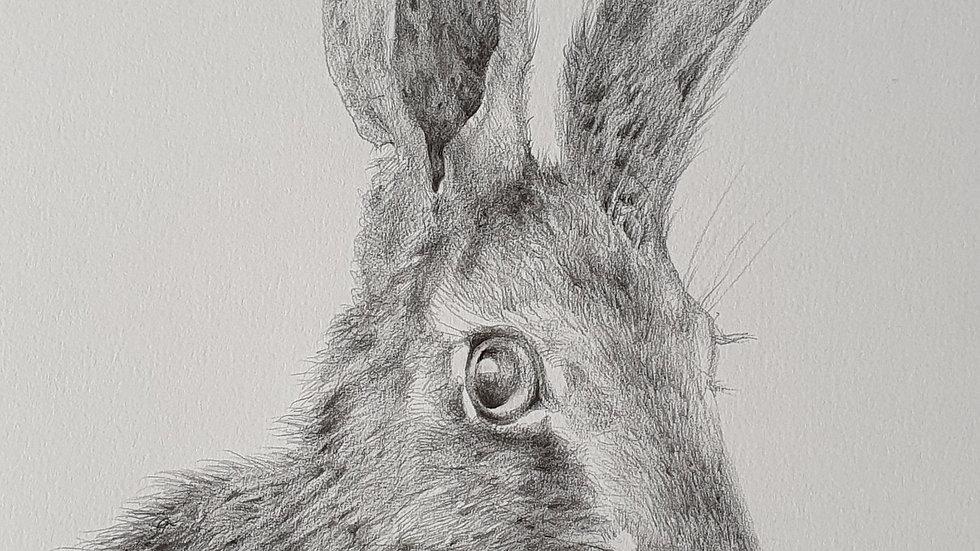 Hare I -Elizabeth Miller-Vermeulen