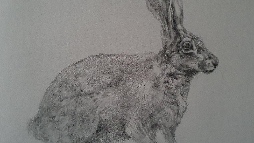 Hare IV-Elizabeth Miller-Vermeulen